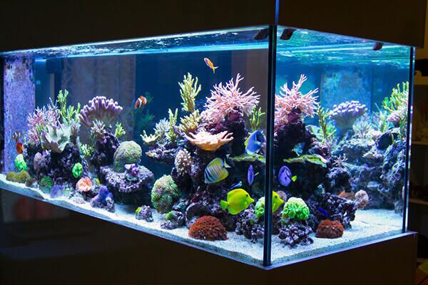 Sử dụng đèn led bể cá là việc làm cần thiết